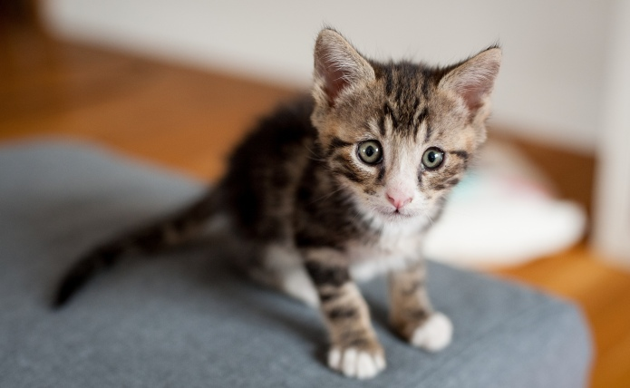 50 Cute kitten names for your