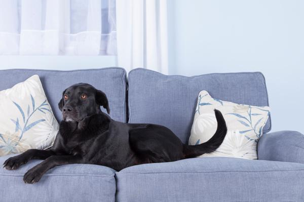 lovely best dog friendly furniture | 9 Tips for choosing pet-friendly furniture – SheKnows