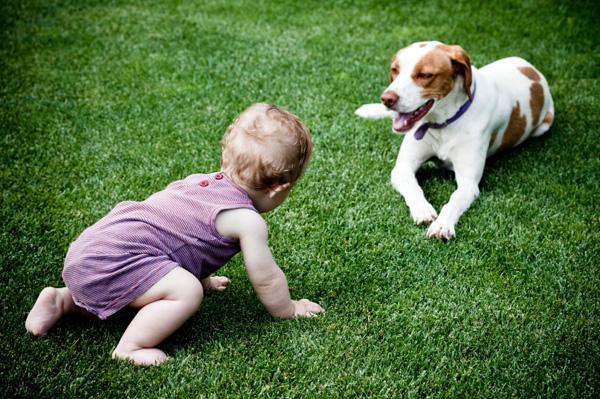 Baby crawling towards dog