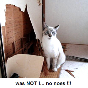 Cat remodeling | Sheknows.com