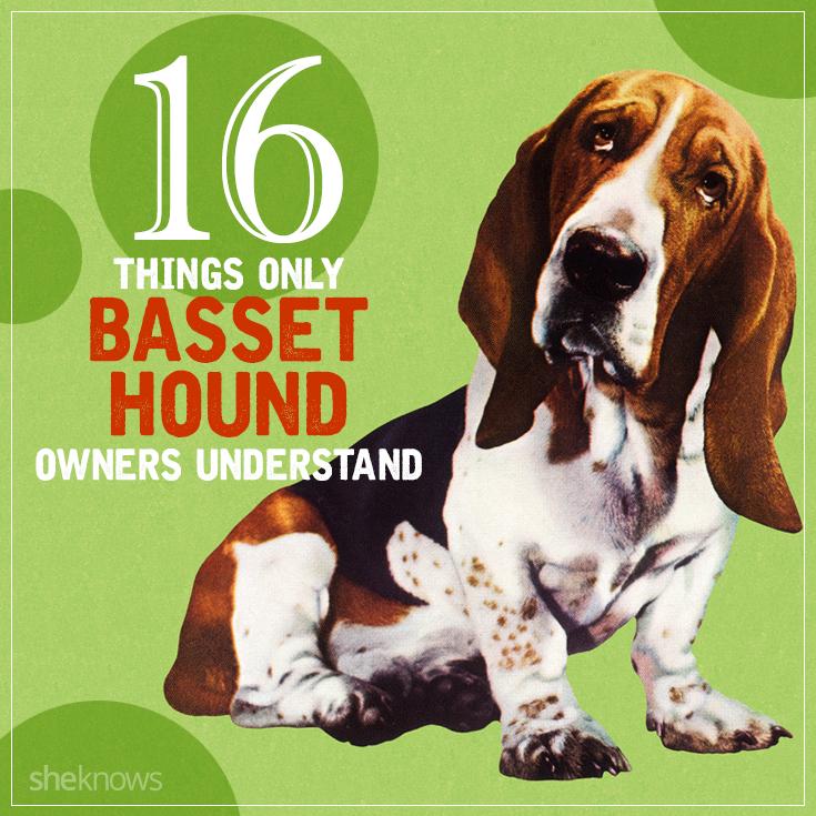 Basset hound facts