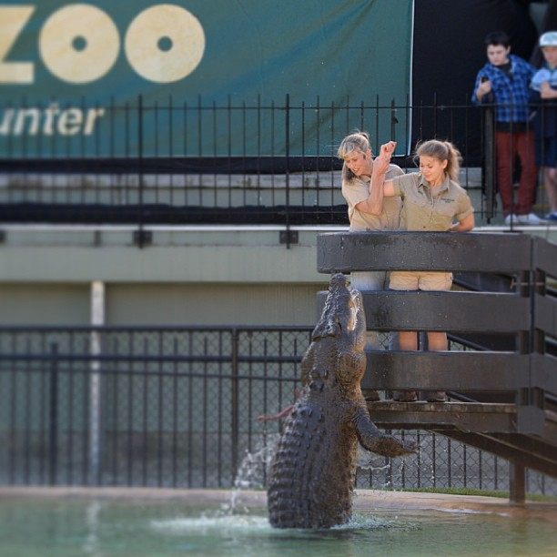 bindi-irwin-croc-shows