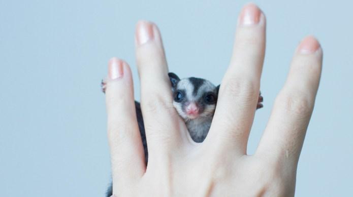 10 Unique Pets You'll Love Just