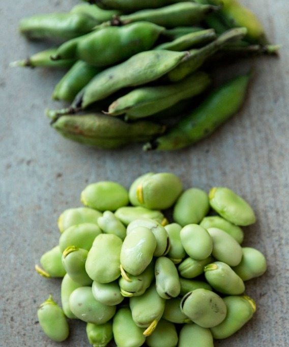 lima beans and pods