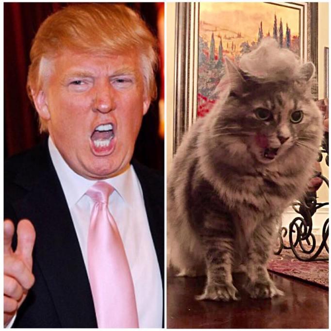 Trump-expressions