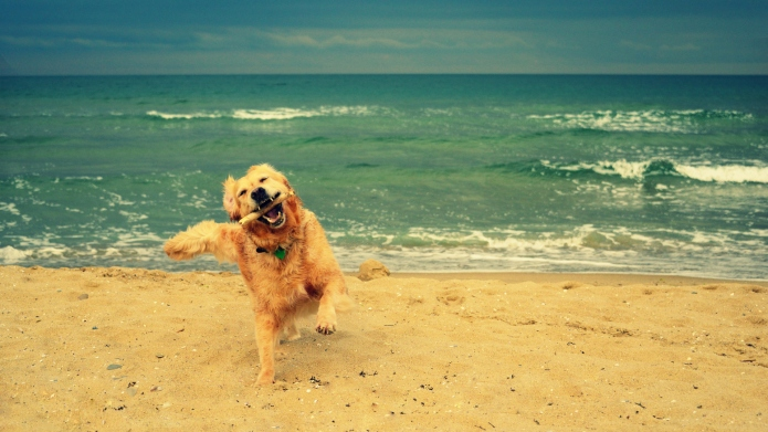 Water-Loving Dogs That Are the Perfect Companion for Beach ...