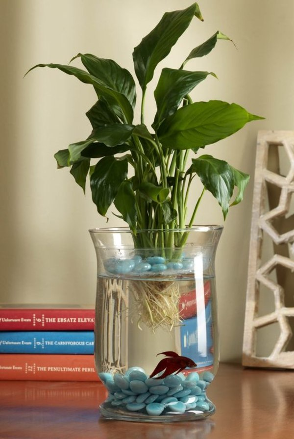How To Grow A Lily Add Little Wow Factor In Your Fish