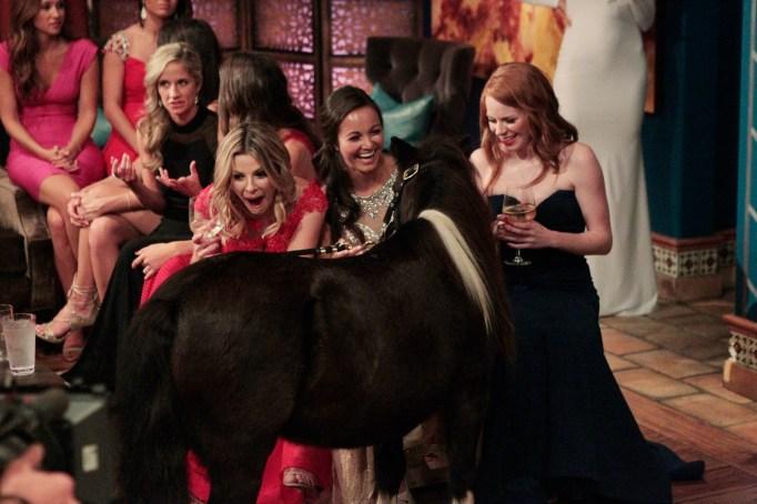 The Bachelor Season 20 premiere mini horse