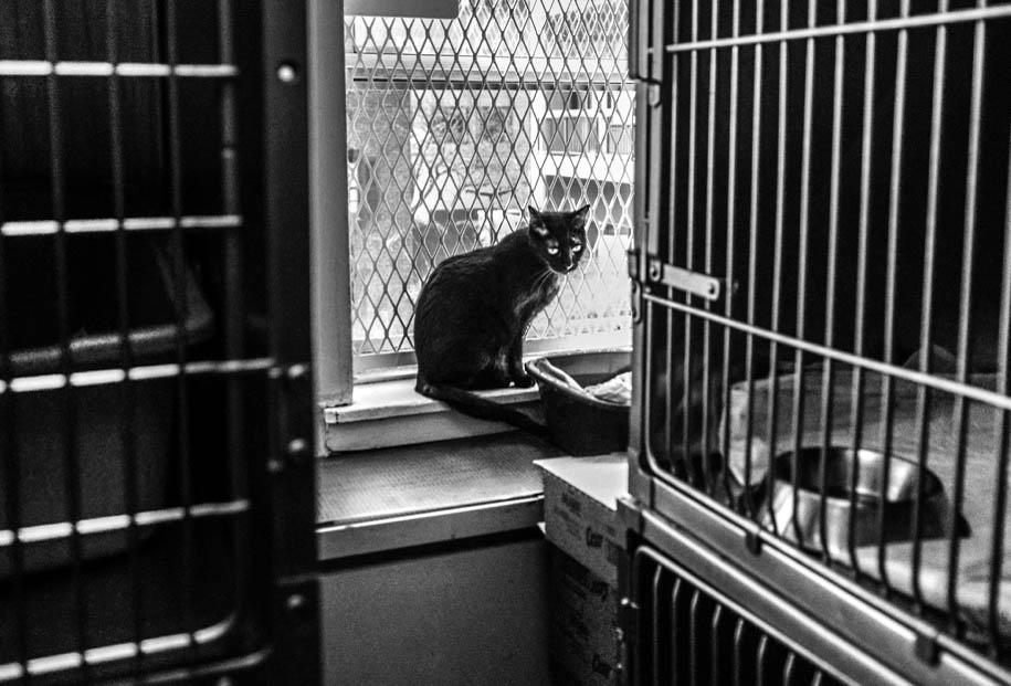 Adoptable black cat