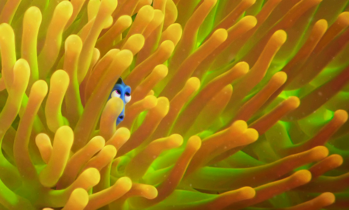 New technology helps Dory