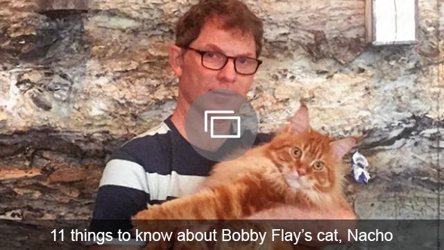 Bobby Flay cat slideshow