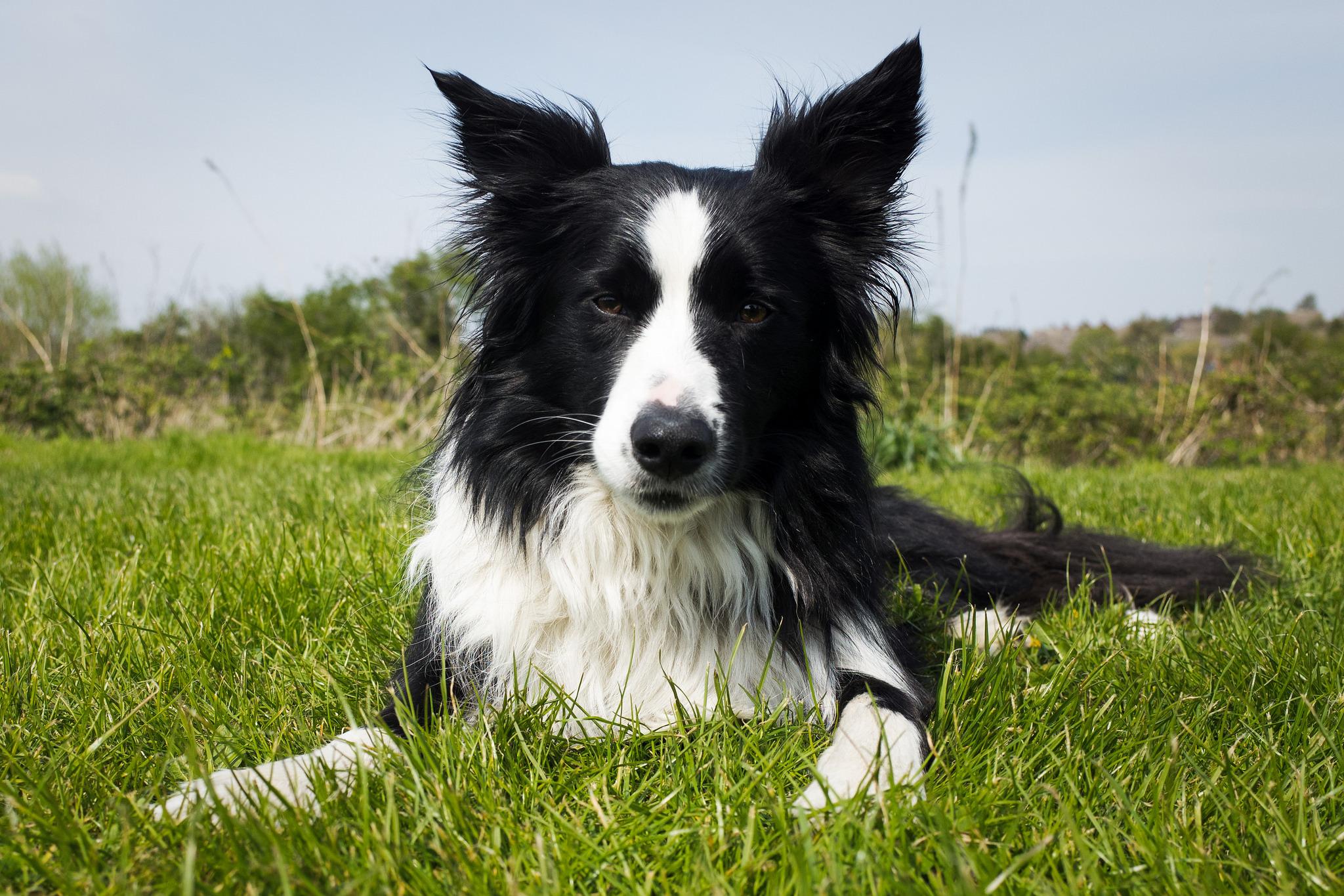 самые умные собаки с картинками статье узнаете