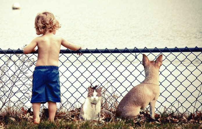 The best pets for families with