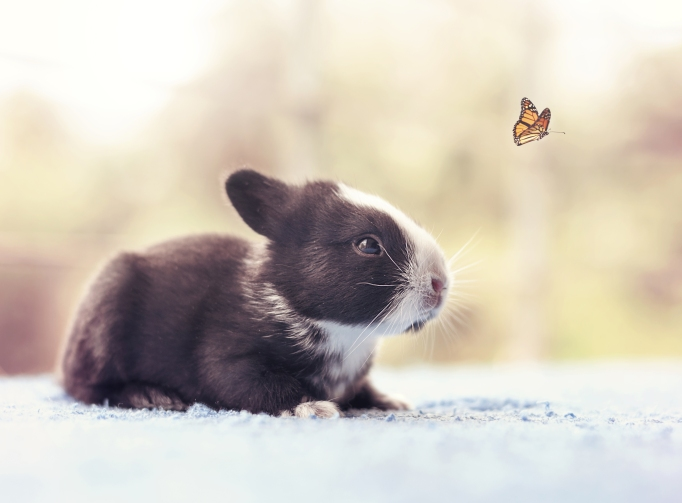 Baby bunny day 13