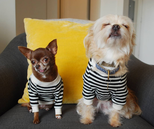 5 NYFW trends for dogs who