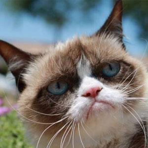 25 of the best grumpy cat
