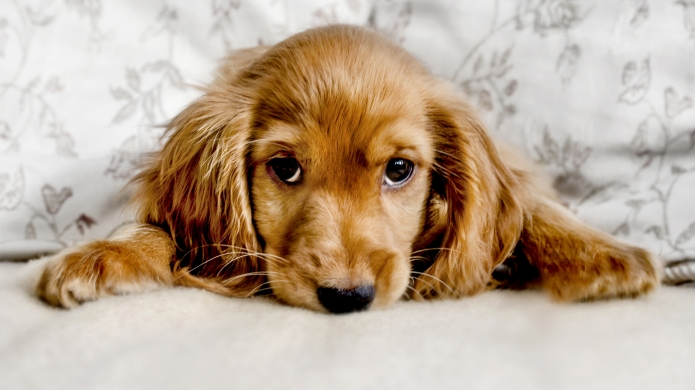 5 Steps to Fulfill Your Pet's