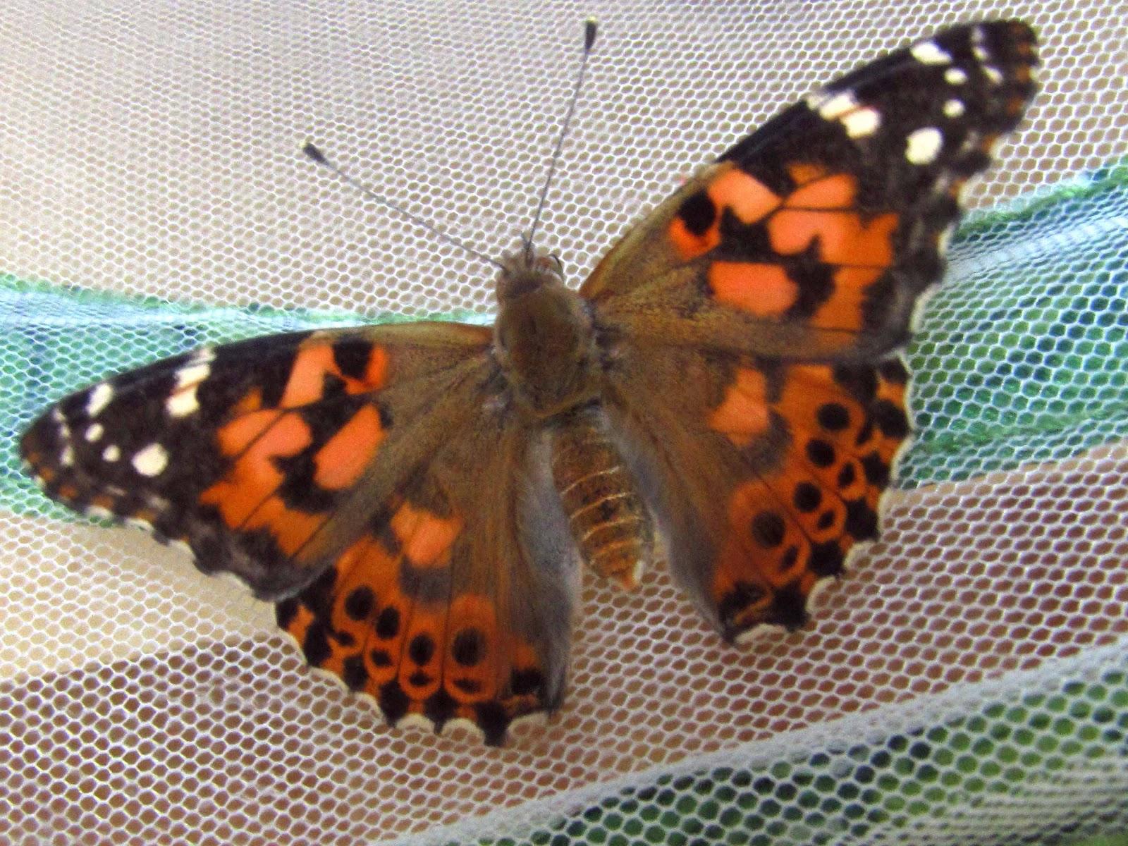 Butterflies | Sheknows.com