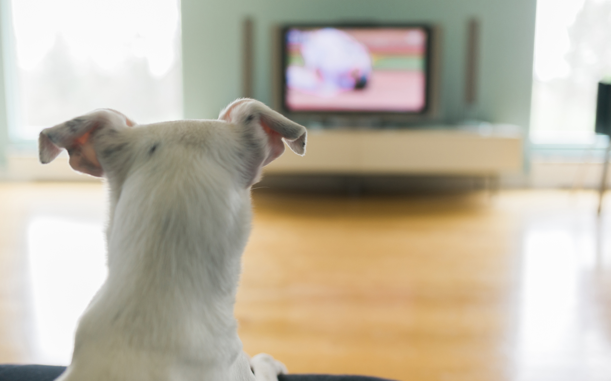 Is it OK to let your dog watch TV if they like it? – SheKnows