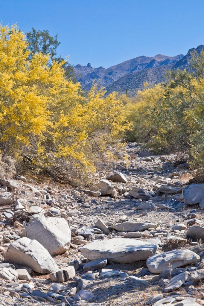 Rocky desert terrain in the Arizona mountains