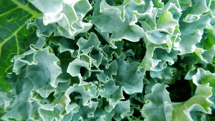 Could too much kale be harmful