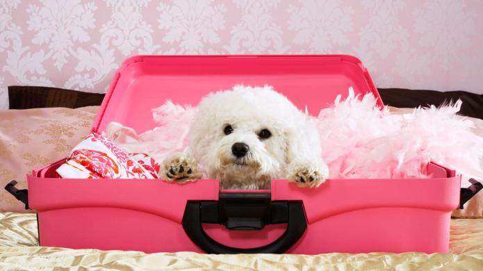 Best amenities at dog-friendly hotels
