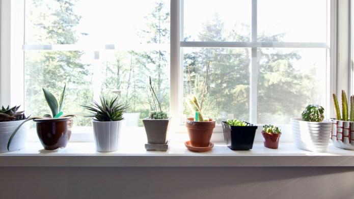 7 Indoor gardening hacks if you're