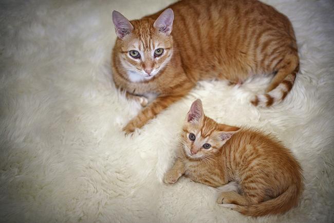 cats on carpet