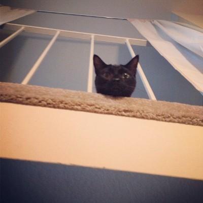 Cat poking head through railings