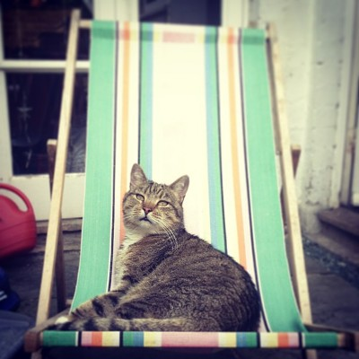 Cat on lawn chair