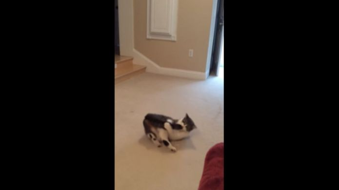 Cat picks a fight with his