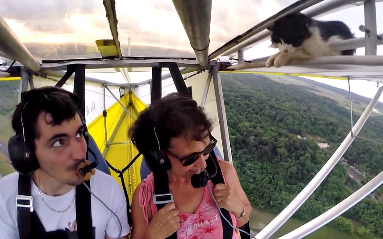 Cat accidentally goes hang gliding, holds on for dear life (VIDEO