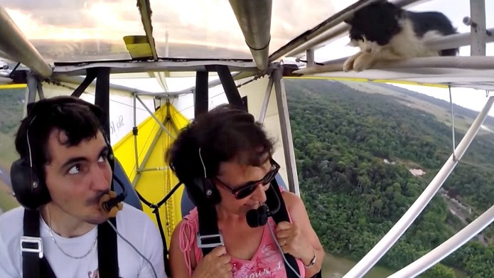 Cat accidentally goes hang gliding, holds