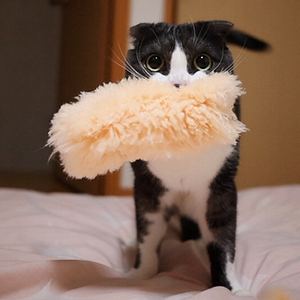 Cat with fluffy thing | Sheknows.com