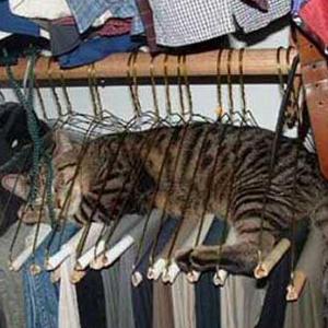 Cat closet lounge | Sheknows.com