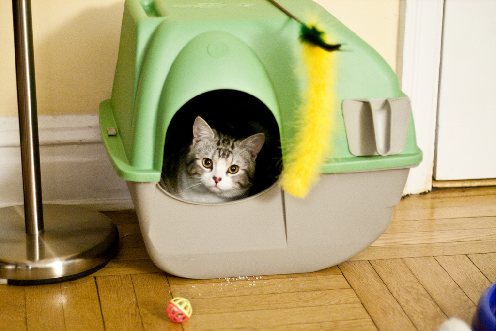 Diy Hidden Litter Box Ideas To Up The Style Factor In Your Cat