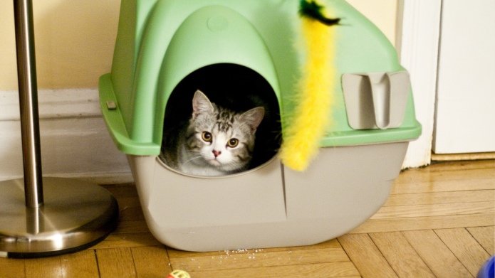 DIY hidden litter box ideas to