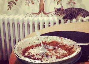 Cat loves pie | Sheknows.com