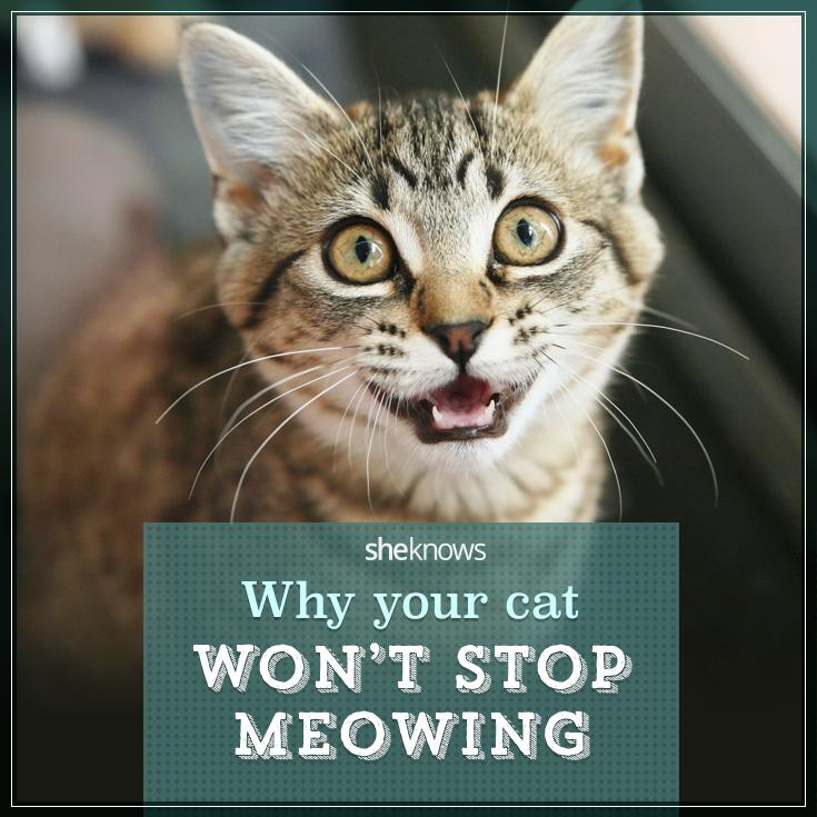 Cat won't stop meowing