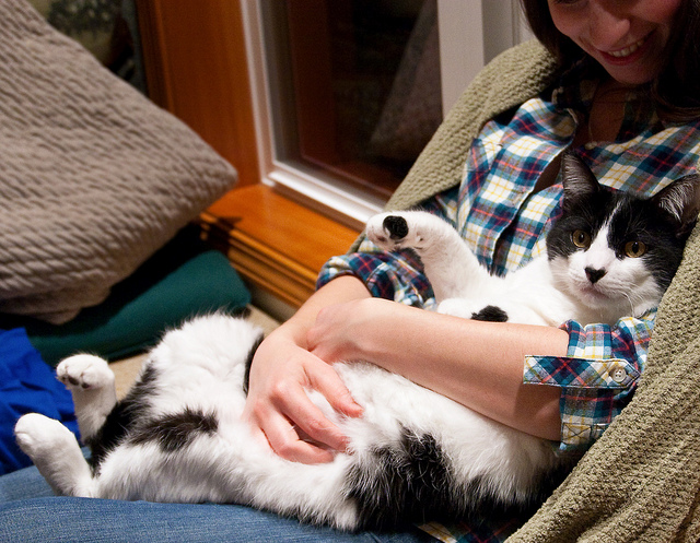 Cat hug on couch