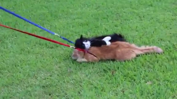Cats can't be leash-trained and here's