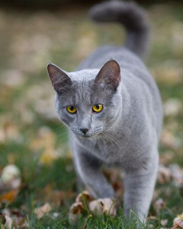 Cat roaming outside
