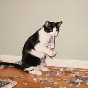Cat paper shredder | Sheknows.com