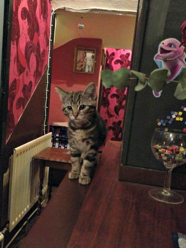 Bag of Nail cat pub, Bristol