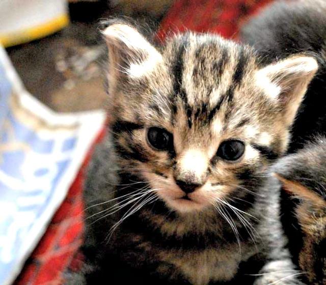 Bag of Nails cat pub, Bristol