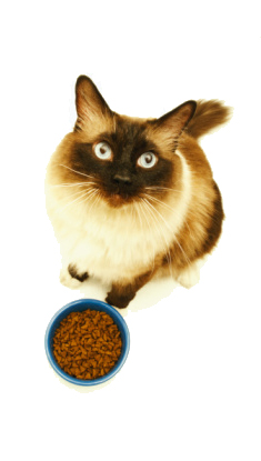 Cat with food | Sheknows.com