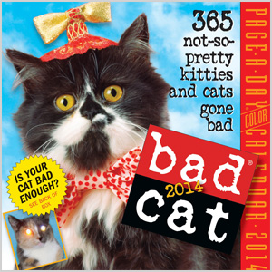 Cat-a-day Calendar