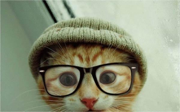 cat hipster glasses