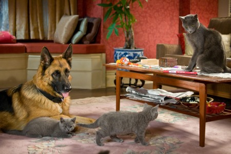 Cats and Dogs: The Revenge of Kitty Galore