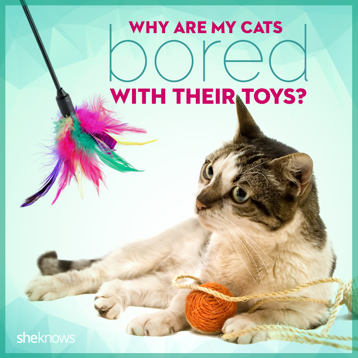 Cats are bored with their toys